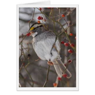 White-throated Sparrow Card
