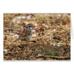 White Throated Sparrow Greeting Cards