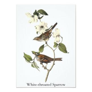 White-throated Sparrow - John Audubon Card