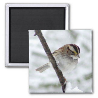 White Throated Sparrow Magnet
