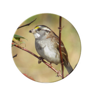 White-throated Sparrow Porcelain Plate