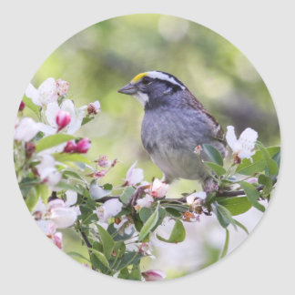 White-throated Sparrow Round Stickers