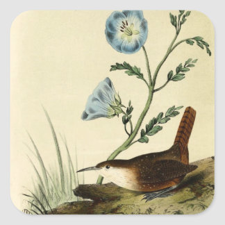 White Throated Wren Square Stickers
