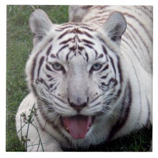 white-tiger10x10 ceramic tile