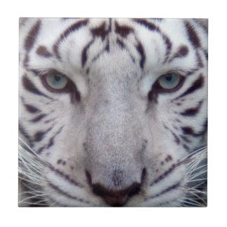 white-tiger2-10x10 azulejo cuadrado pequeño