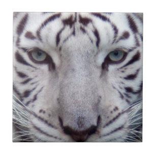 ee6675b22a3f9 White Tiger Decorative Ceramic Tiles | Zazzle