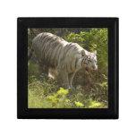 White tiger 009 gift boxes