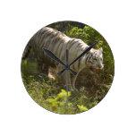 White tiger 009 round wallclock