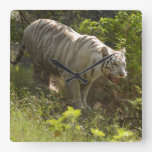 White tiger 009 wall clocks