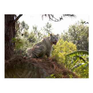 White tiger 012 postcard