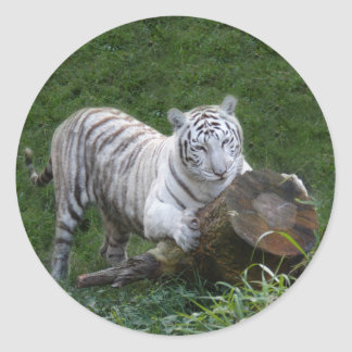 White tiger 015 classic round sticker
