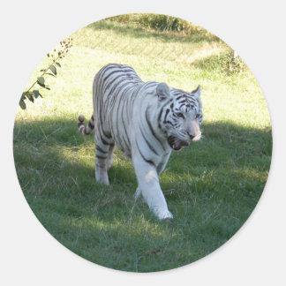 White tiger 016 stickers