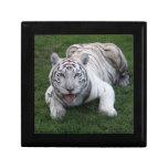 white tiger 1 9x9 jewelry box