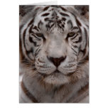 White Tiger 4 Cards