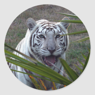 White Tiger_6170e Classic Round Sticker