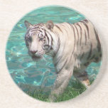 White tiger against blue water walking photograph beverage coasters