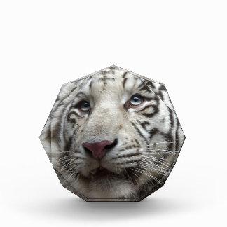 White Tiger Acrylic Award