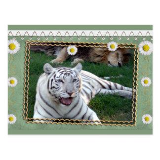 white-tiger-b-st-patricks-0076 tarjeta postal