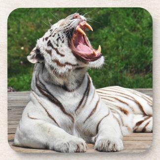 White Tiger, Bengal Tiger Coaster
