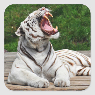 White Tiger, Bengal Tiger Sticker