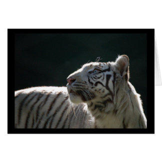 WHITE TIGER BLANK NOTE CARD