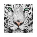 White Tiger Canvas Print