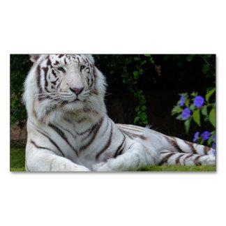 white tiger cat stripes feline wild magnetic business card