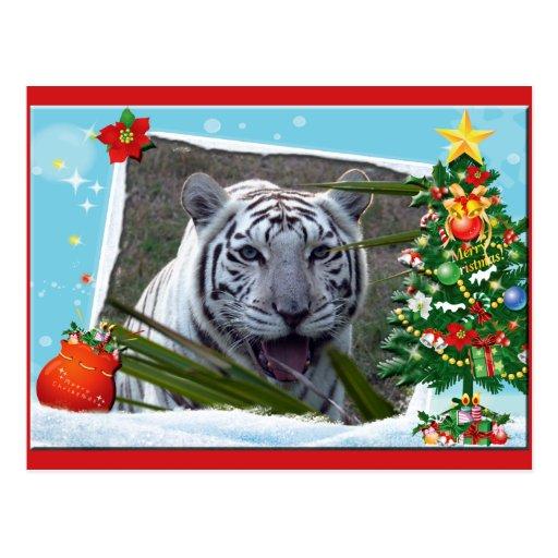 White Tiger Christmas Postcard