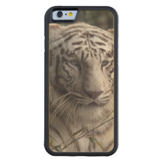 White Tiger Close-up Carved® Maple iPhone 6 Bumper Case