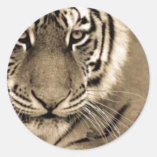 White Tiger Close Up Classic Round Sticker