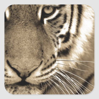 White Tiger Close Up Square Sticker