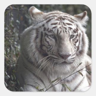 White Tiger Close-up Square Sticker