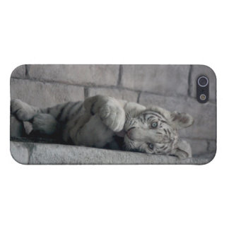 White Tiger cub 3 (仔 tora of white tiger) Case For iPhone SE/5/5s
