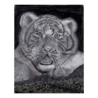White Tiger Cub in Charcoal print