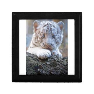 White Tiger Cub Is Paw Licking Good Gift Box