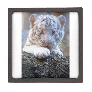 White Tiger Cub Is Paw Licking Good Keepsake Box