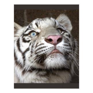 White Tiger Cub Letterhead Template