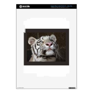 White Tiger Cub iPad 3 Skin