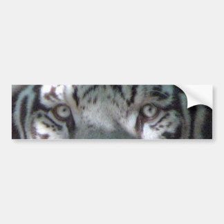 White Tiger Eyes Car Bumper Sticker