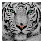 White Tiger Face Print