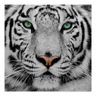 White Tiger Face Print