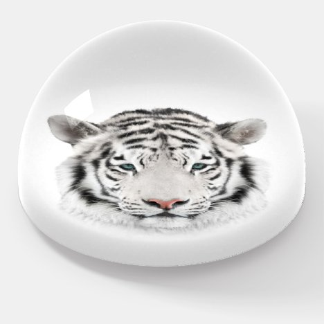 White Tiger Head Dome Paperweight