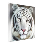 WHITE TIGER II GALLERY WRAP CANVAS