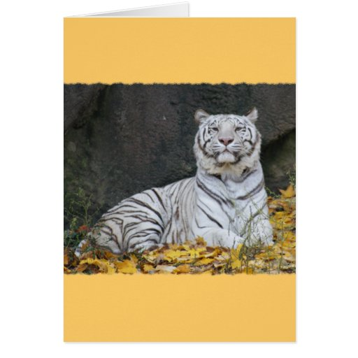 WHITE TIGER in FALL FOLIAGE Greeting Card