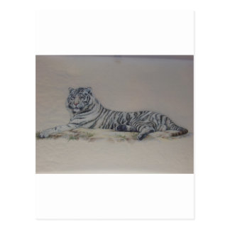 White Tiger in Repose Postcard