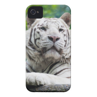 White Tiger iPhone case iPhone 4 Case