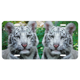 White Tiger License Plate