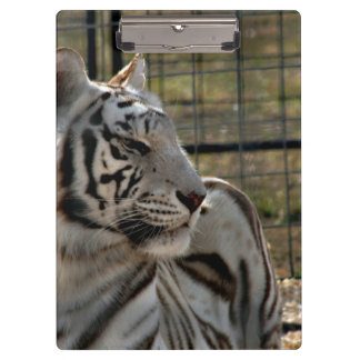 white tiger looking right animal image clipboard