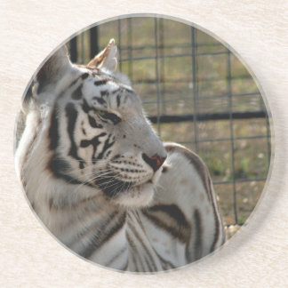 white tiger looking right animal image drink coaster