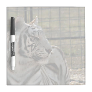 white tiger looking right animal image Dry-Erase boards